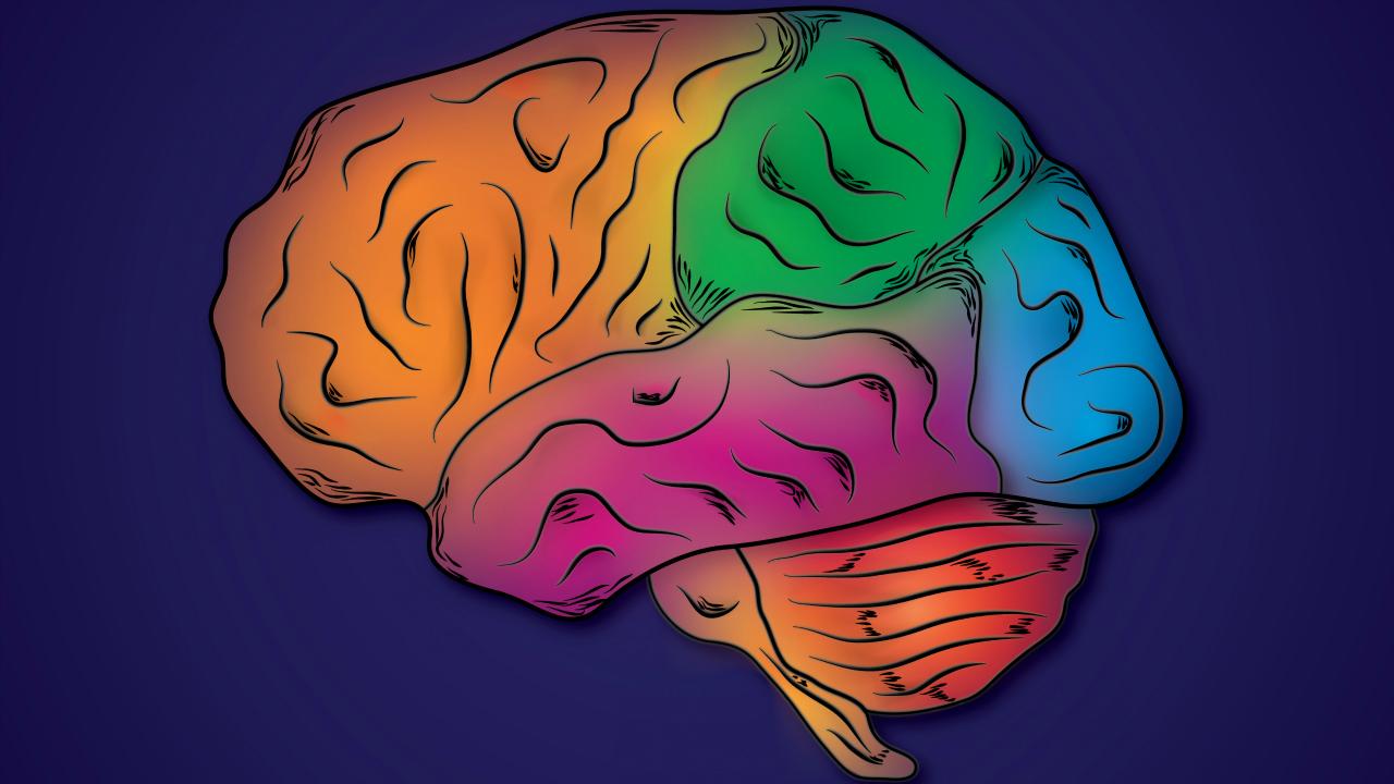 beyin bölümleri