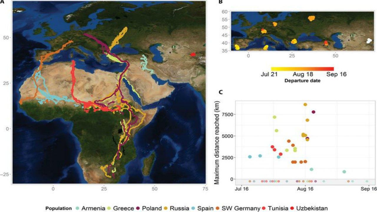 Beyaz leyleklerin göç haritası