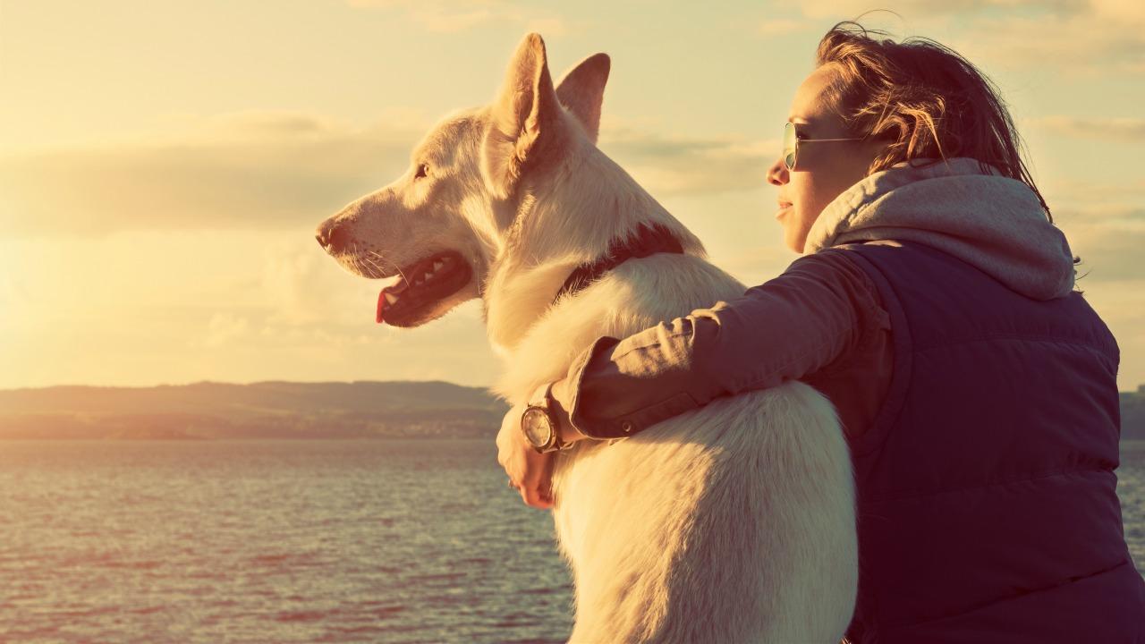 köpek sahibi olmak