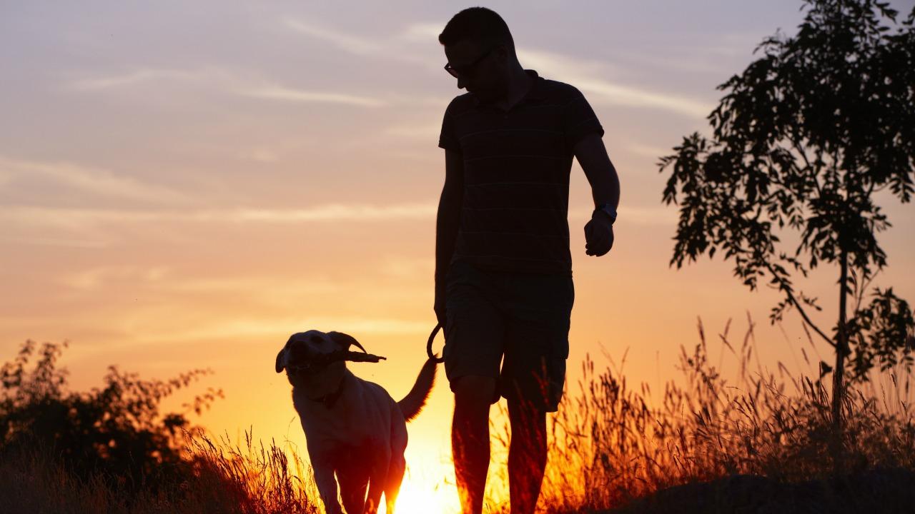 köpek ve adam