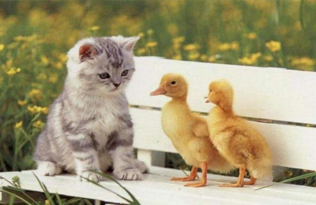 sevimli-yavru-kedi-fotograflari-16