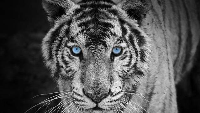 En sıra dışı renklere sahip hayvanlar