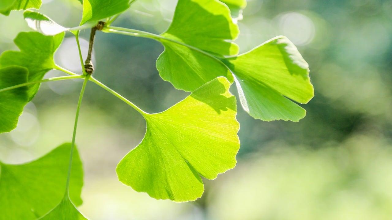Zihninizin psişik gücünü artıran en güçlü bitkiler