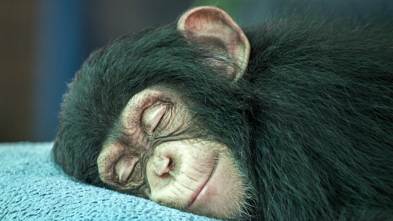 gülümseyen maymun