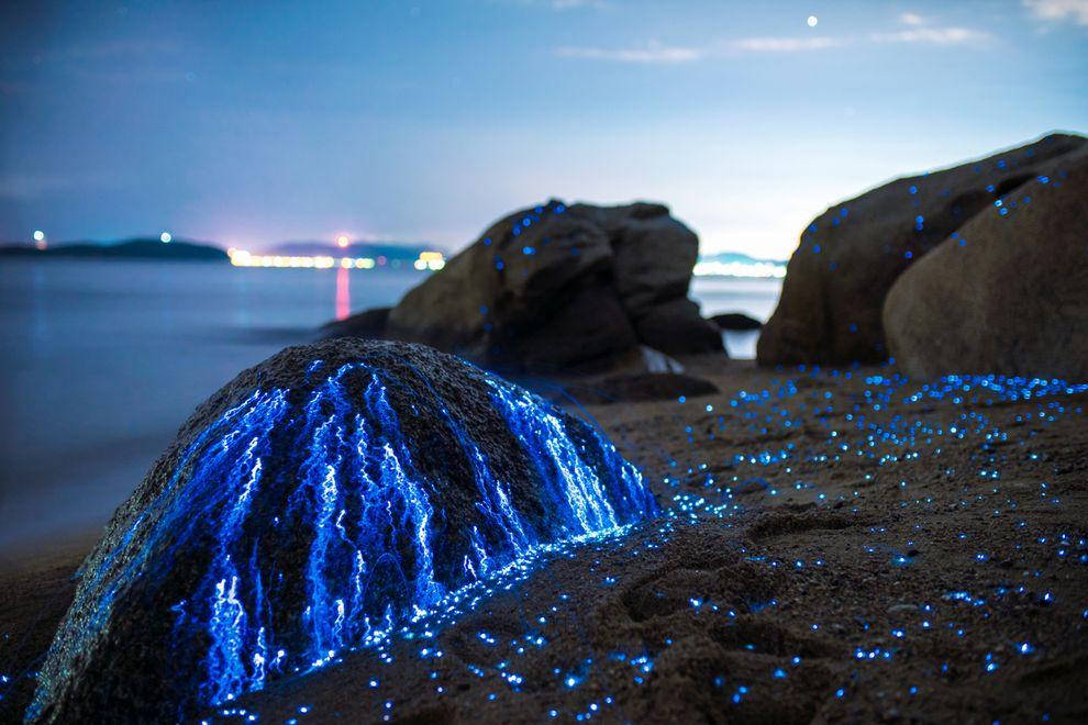 seafireflies-tdub3.jpg.990x0_q80_crop-smart