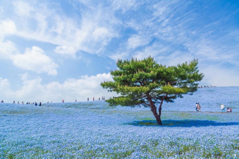 © Hiroki Kondu © National Geographic   Doğayla insanın ortak çalışmasının ürünü olan şaheser fotoğraflar 205355 10147810 R3L8T8D 950 14 1000 3edb8ea1b0 1471426929