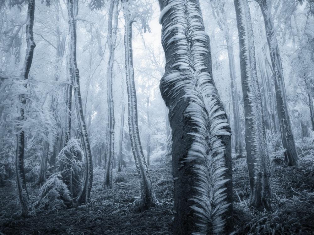 © Jan Bainar   Doğayla insanın ortak çalışmasının ürünü olan şaheser fotoğraflar 206155 12476510 R3L8T8D 990 4 1000 124343d726 1471426929