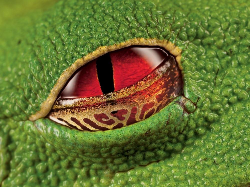 © Ingo Arndt © National Geographic  Doğayla insanın ortak çalışmasının ürünü olan şaheser fotoğraflar 206305 12503710 R3L8T8D 990 13 1000 acf7d633aa 1471426929