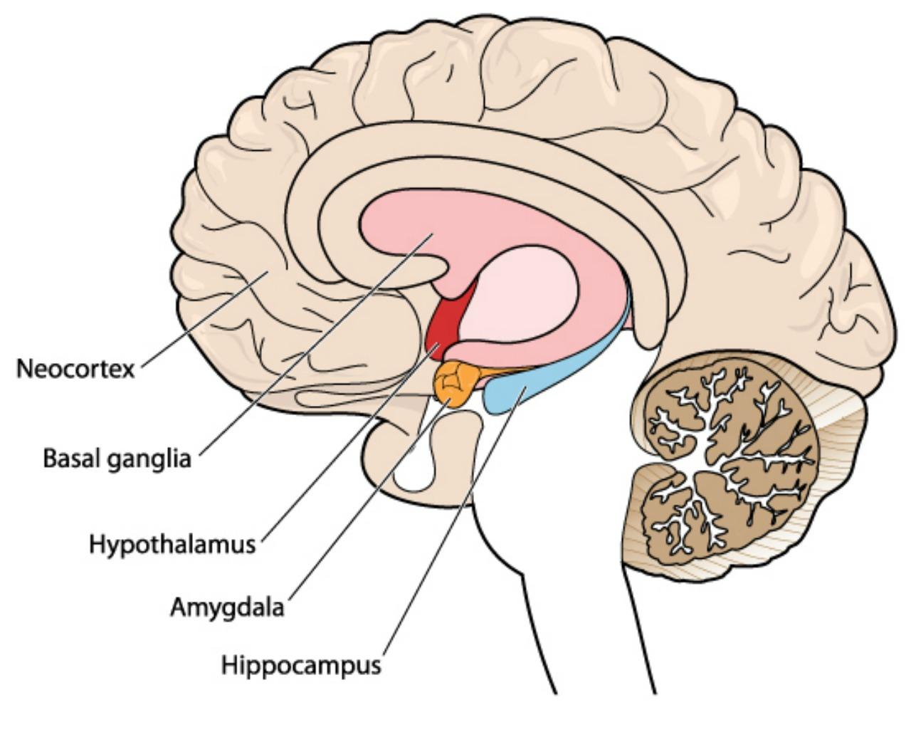 Beynin bazı bölgelerindeki aşırı hareketlilik, hafıza ve dikkat sorunlarına nedne oluyor