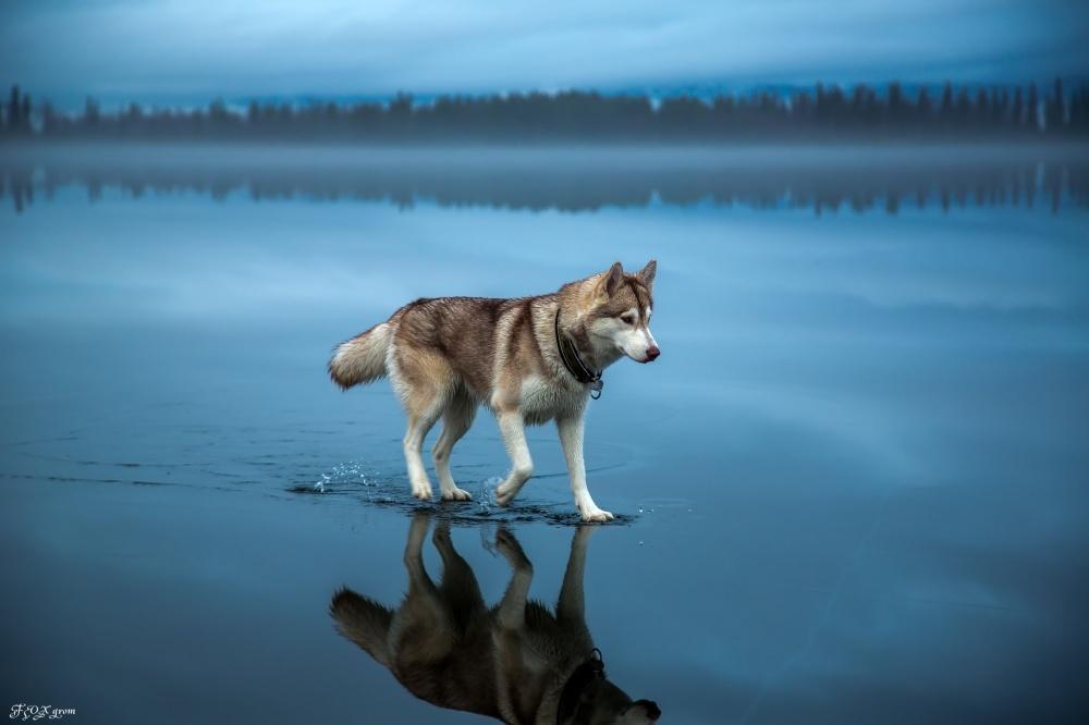 © Fox Grom   Doğayla insanın ortak çalışmasının ürünü olan şaheser fotoğraflar tat 1000 e9851230e5 1471426929
