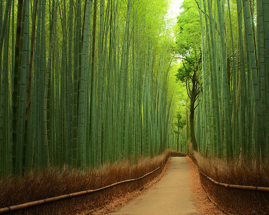 Bambu Ormanları, Japonya
