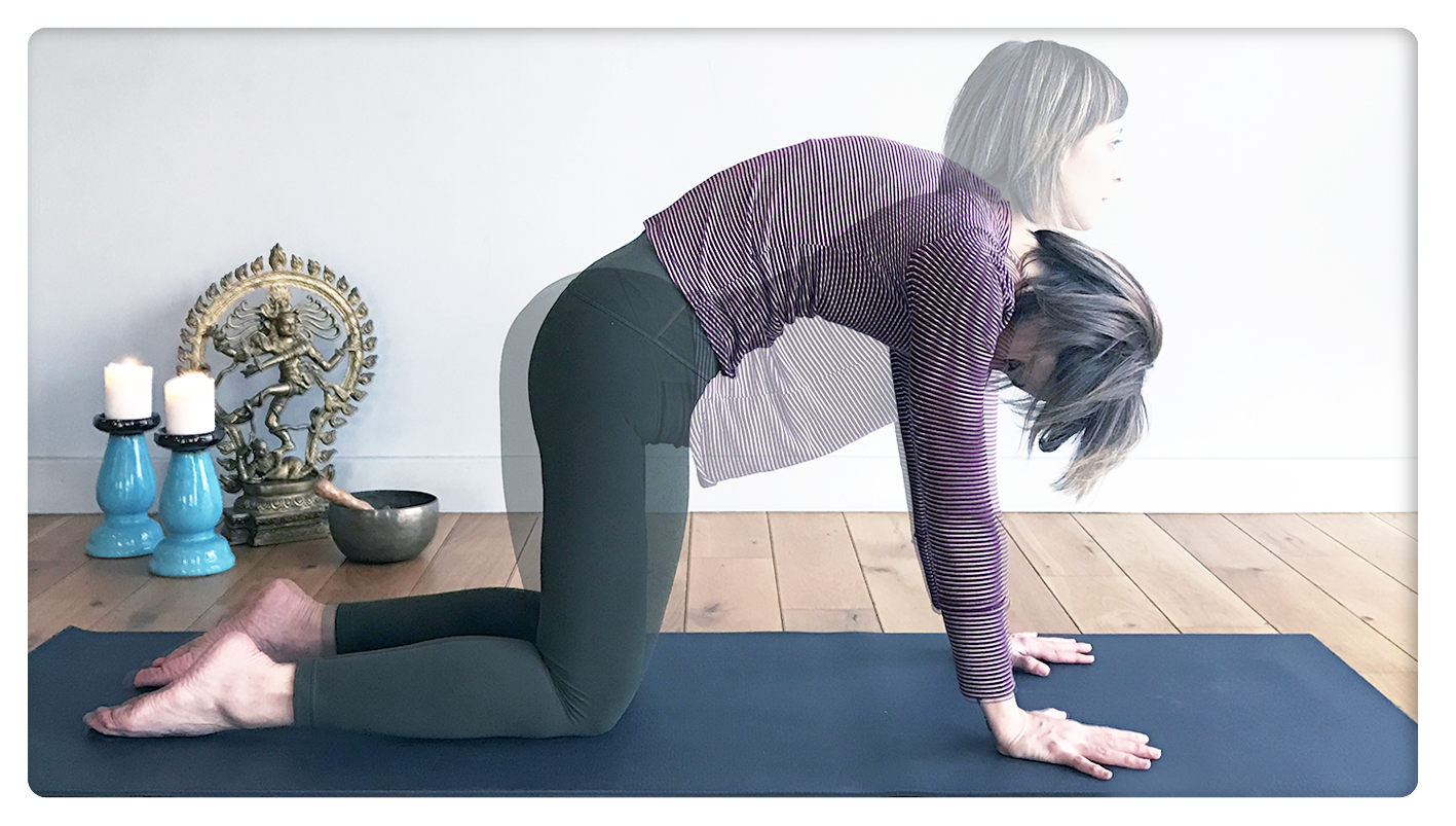 hangover yoga - sinem er - kedi inek