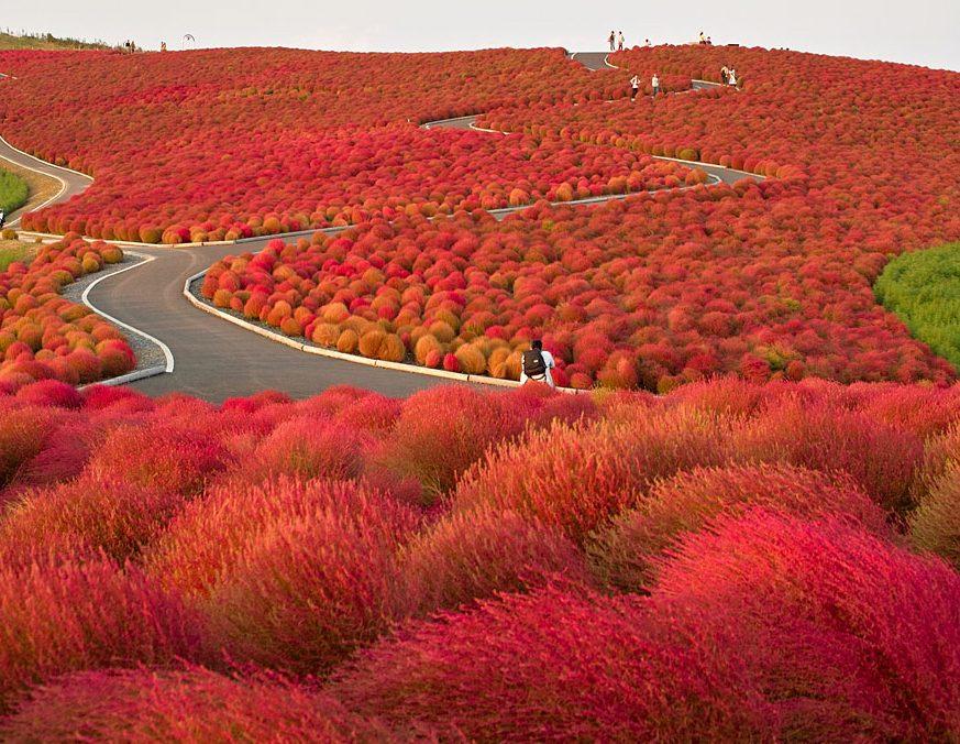 Hitaçi Parkı, Çin