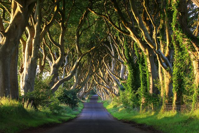 Karanlık Ağaçlar