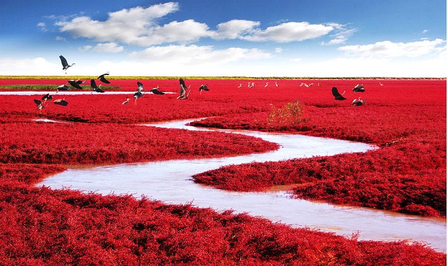 Kırmızı Plaj, Çin