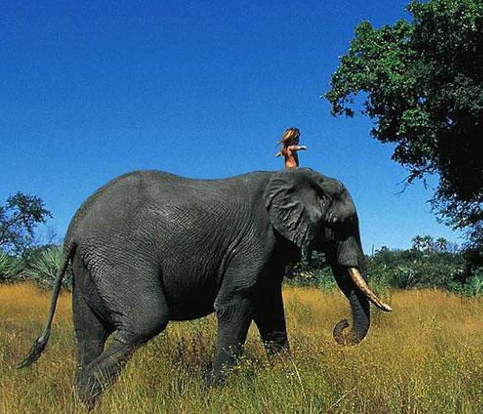 real life mowgli tippi degre african wildlife  e