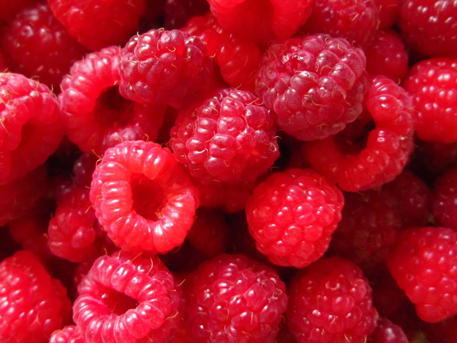 Red-Raspberry-berries-close-up-photography_1600x1200
