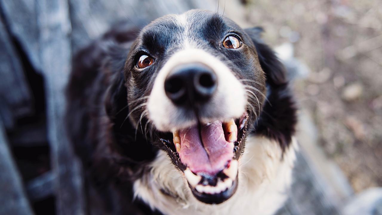 Hindistan cevizi yağının köpeklere olan faydaları