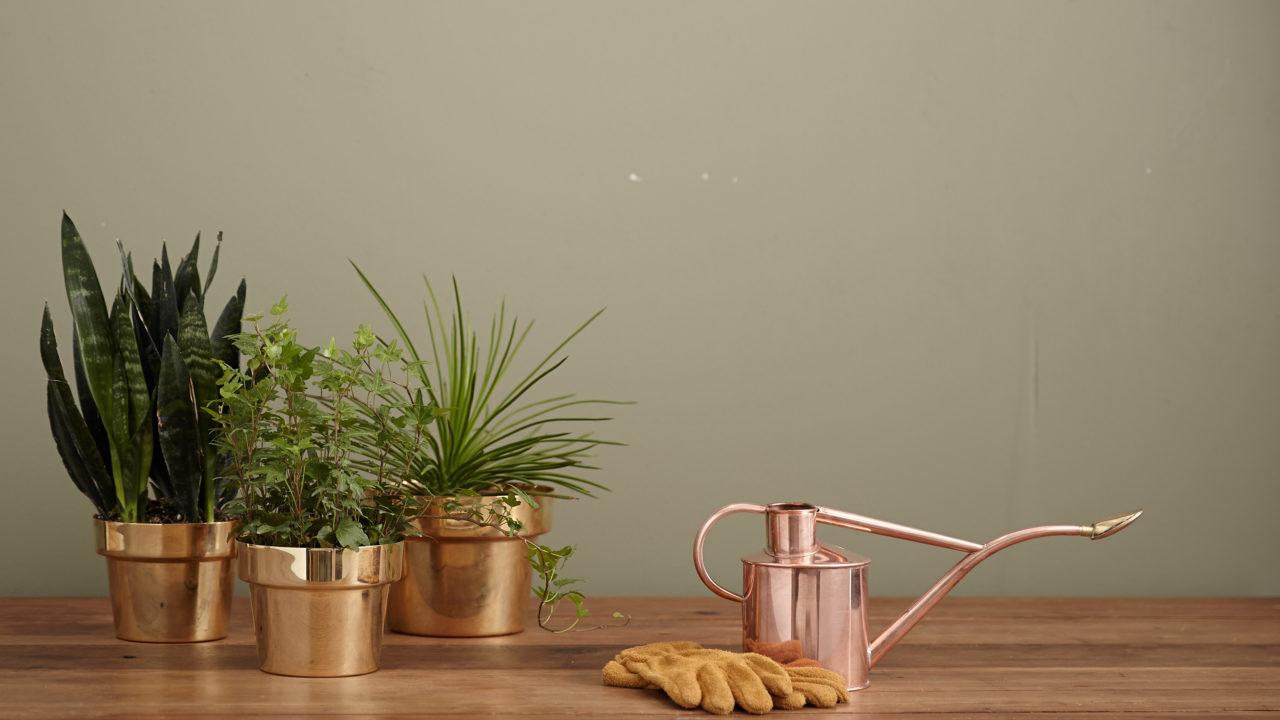 Cilde faydalı bitkiler ve doğal tariflerle evinizde bir 'cilt bakım bahçesi' oluşturun
