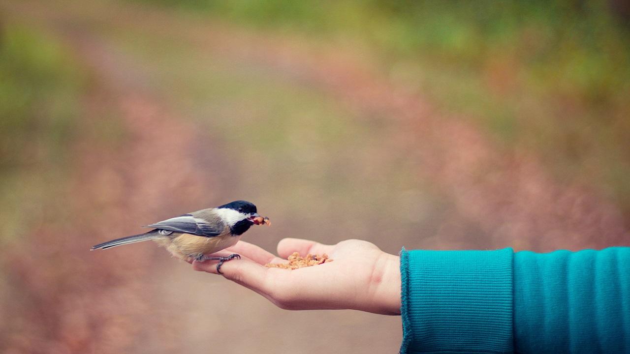 """İyilikte """"su"""" gibi olun: Karşılığını umursamadan iyilik yapabilmek"""