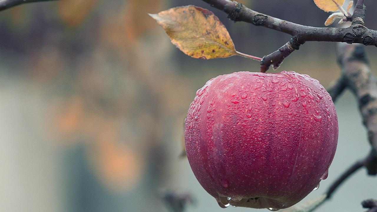 Gıda, tarım ve su sorunlarının çözümü için: Kök Projekt