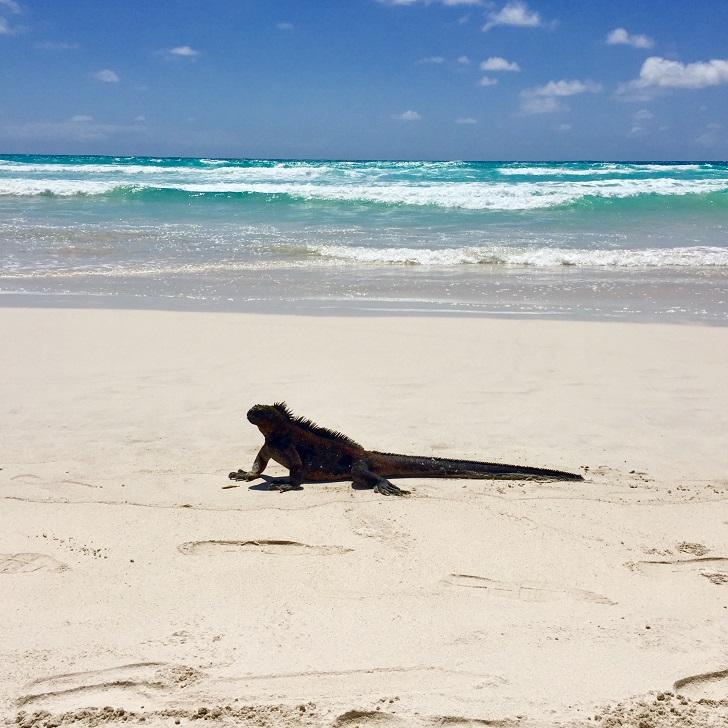 Dünyanın kalbinden çıkan ateş parçaları: Galapagos Adaları