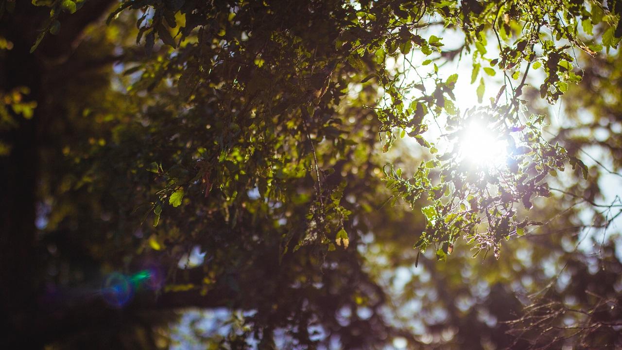 Ultraviyole olmayan tedavi: İnfraruj ışın terapisi