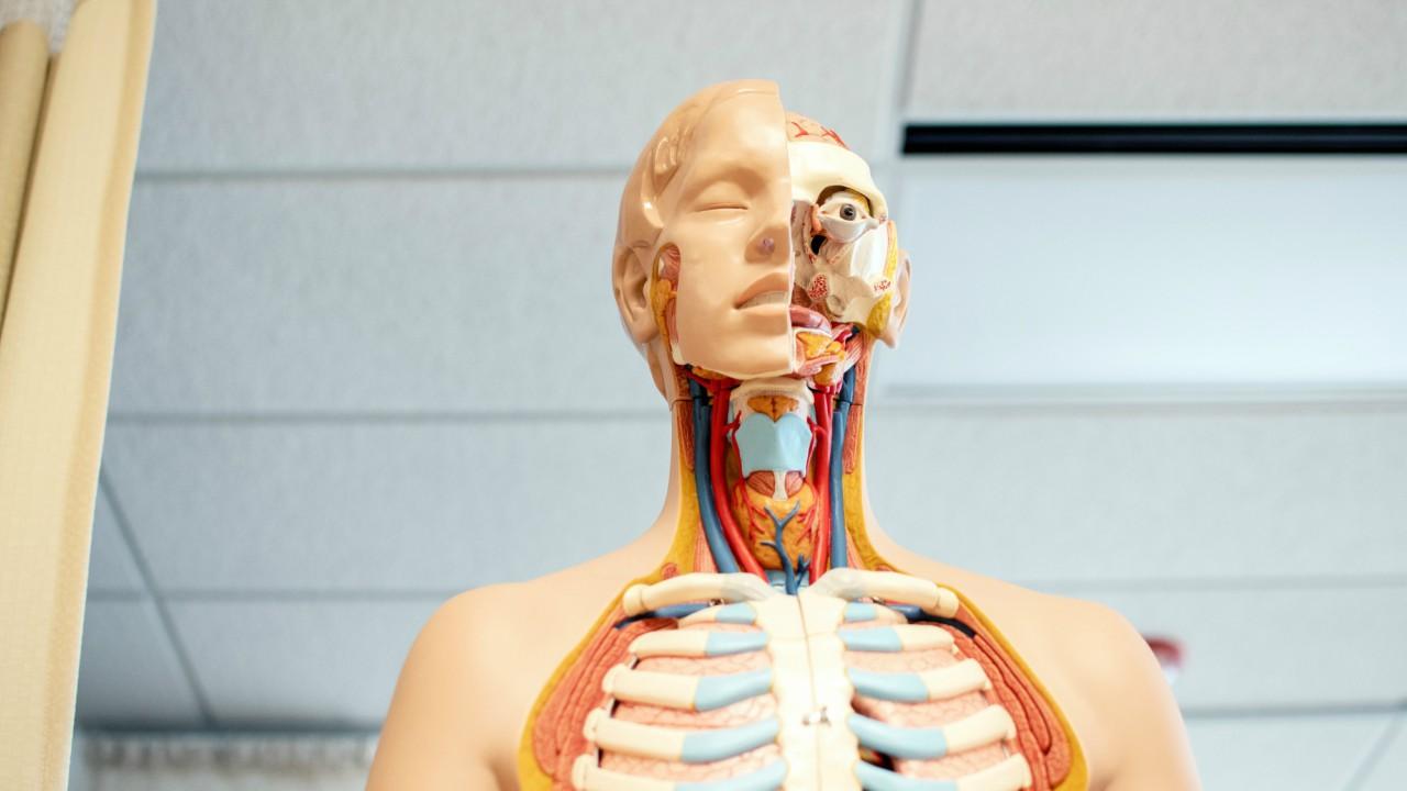 Vücudumuzun gizli kahramanı endokrin sistemi ile ilgili bilmeniz gereken her şey