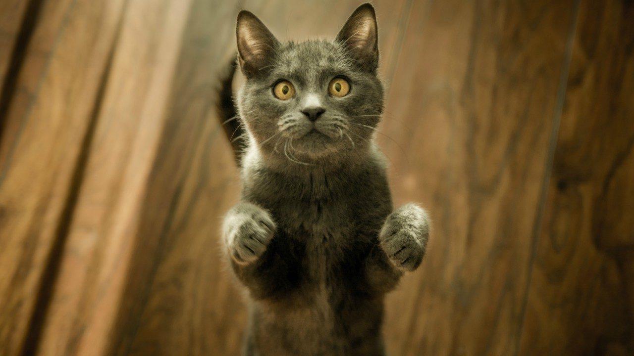 Hepimizin aklındaki soru: Kediler neden garip davranır?