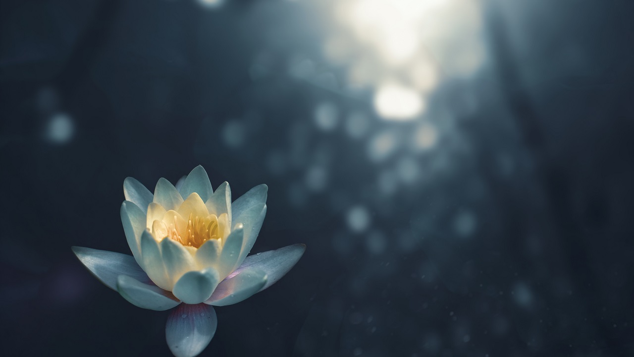 Eleştiriyi şefkate çevirmek: Bir içinden geçme pratiği olarak meditasyon