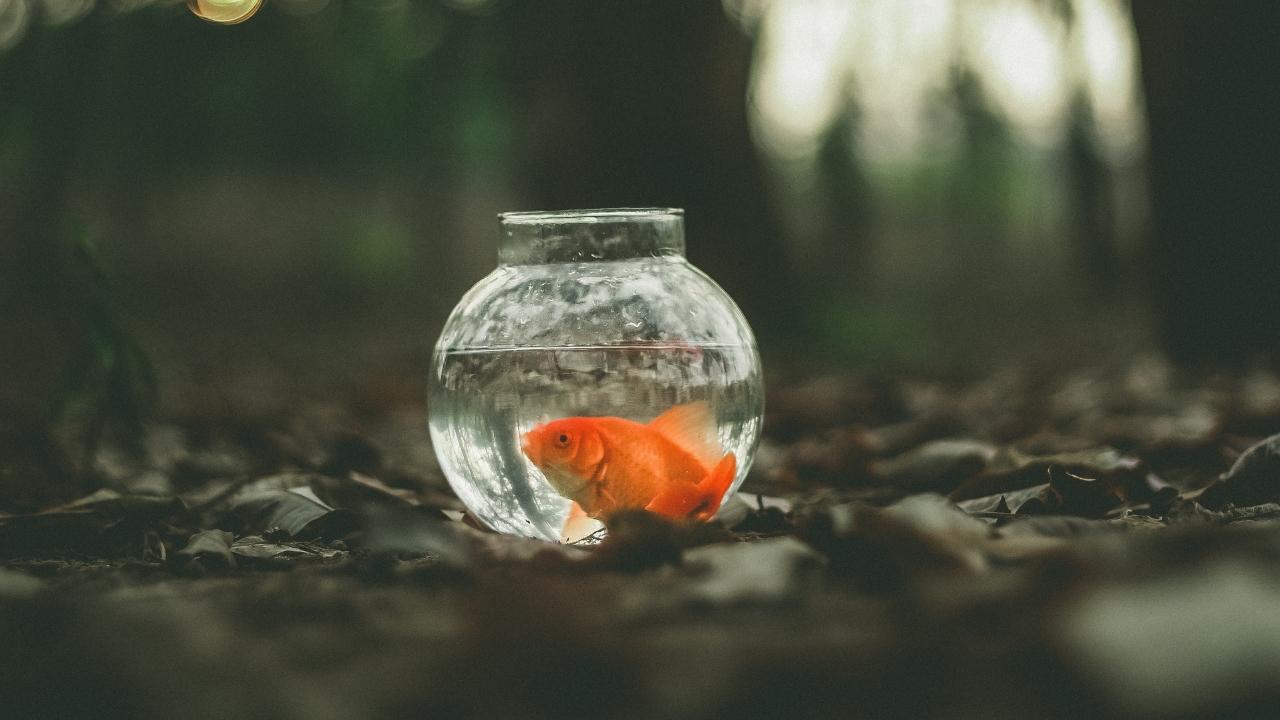 Ne geliyorsa hoş gelsin: Yaşamın hayatımıza getirdiği öğretiler
