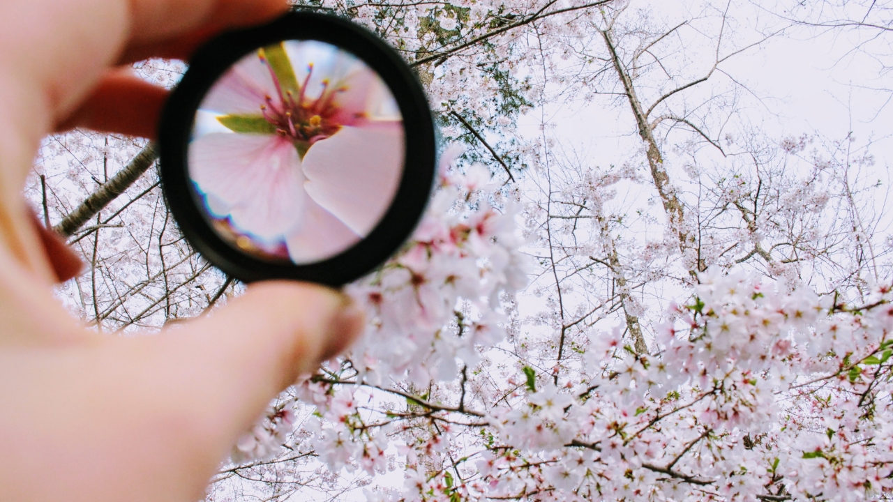 Güzellik ayrıntıda gizlidir: Genellemeler fazla genel değil mi?