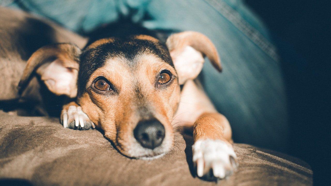 En eski dostumuz: Araştırmalara göre ilk evcilleştirilen hayvan, köpekler - Uplifers