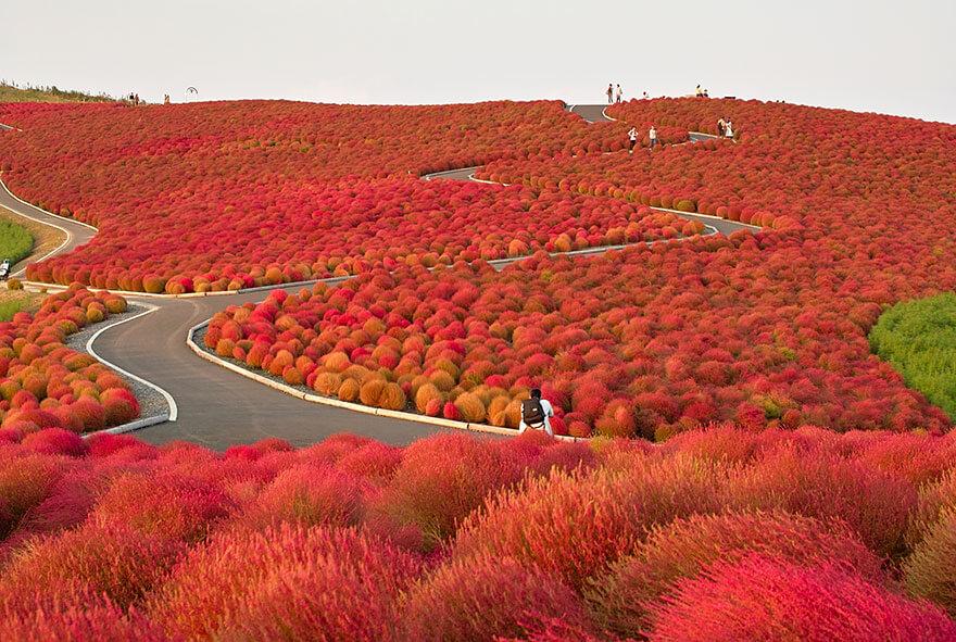 Hitachi Park, Japonya