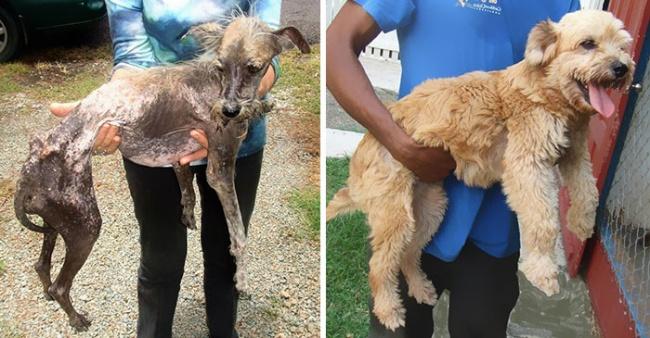 kurtarılanhayvanlar
