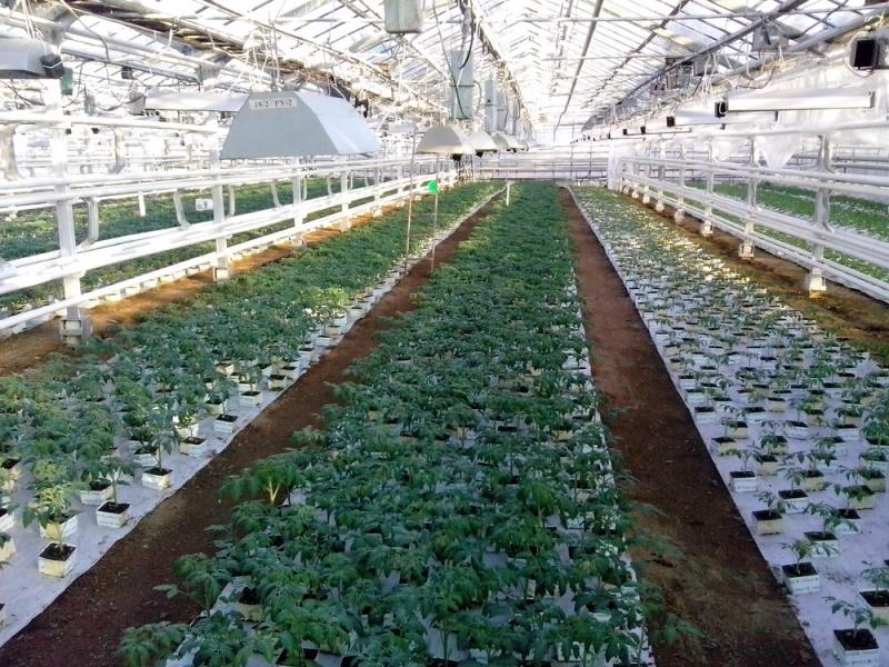 Bilimsel tarım uzmanı