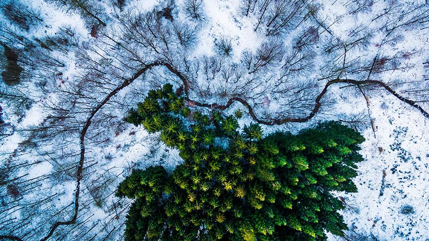 Kalbyris Ormanı, Danimarka