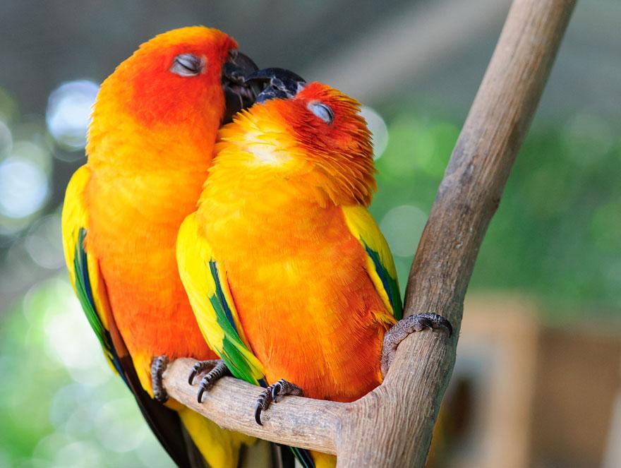 papaganlar