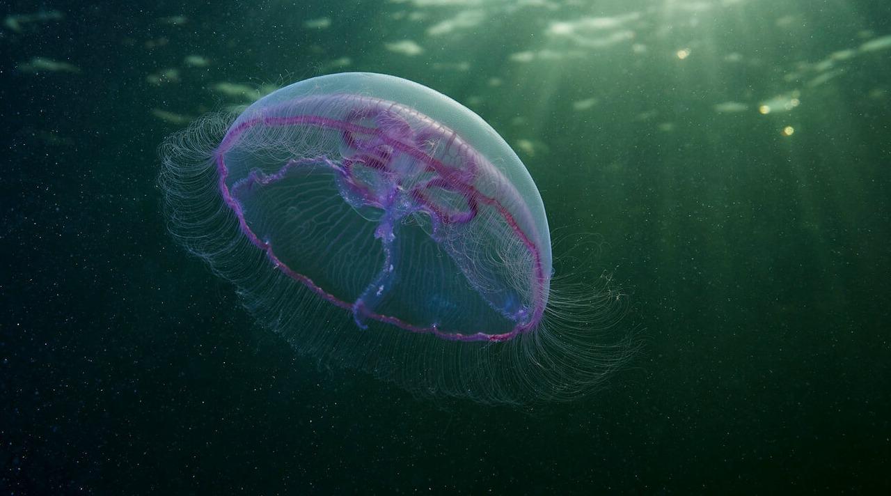 Alexander Semenov'un deniz anası fotoğrafları