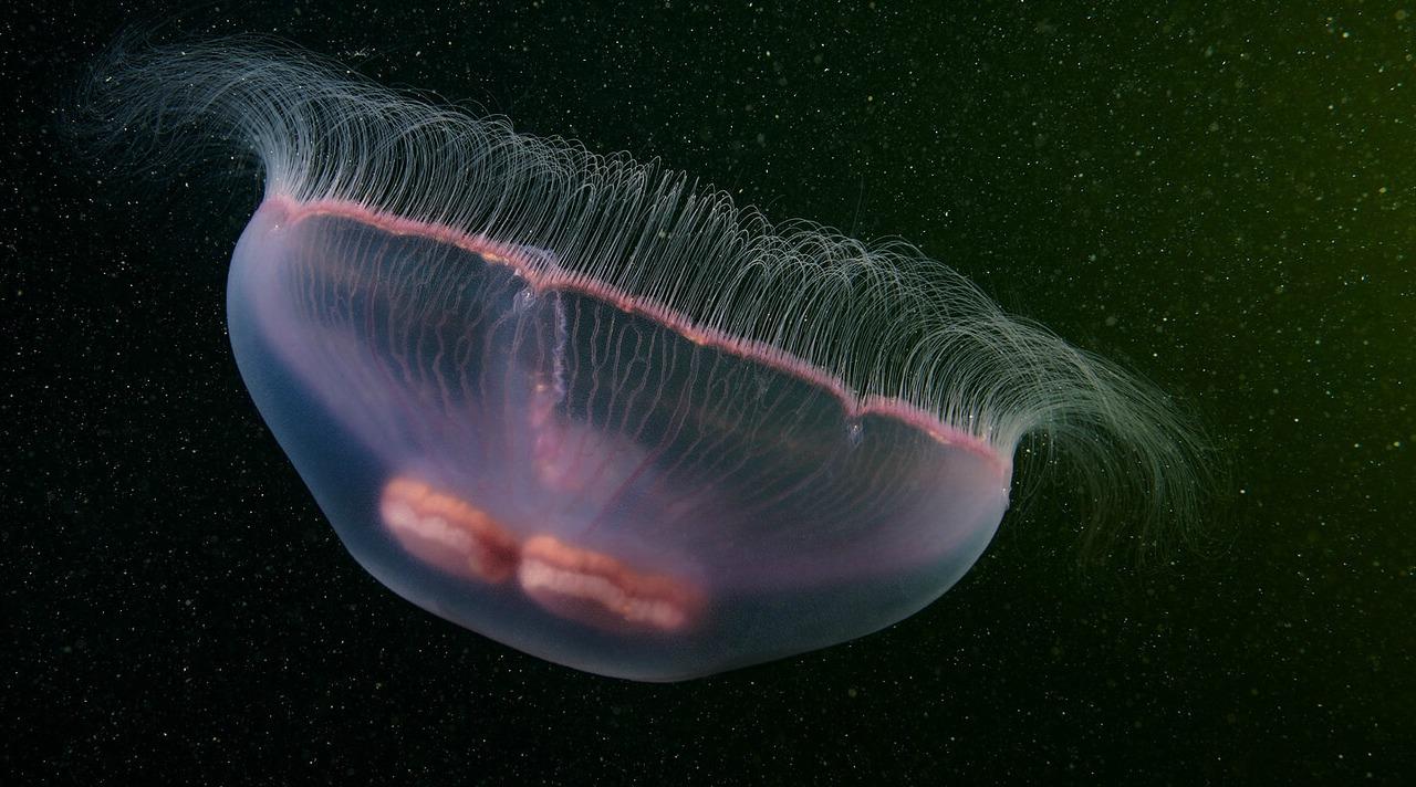 deniz analarının eşsiz fotoğrafları