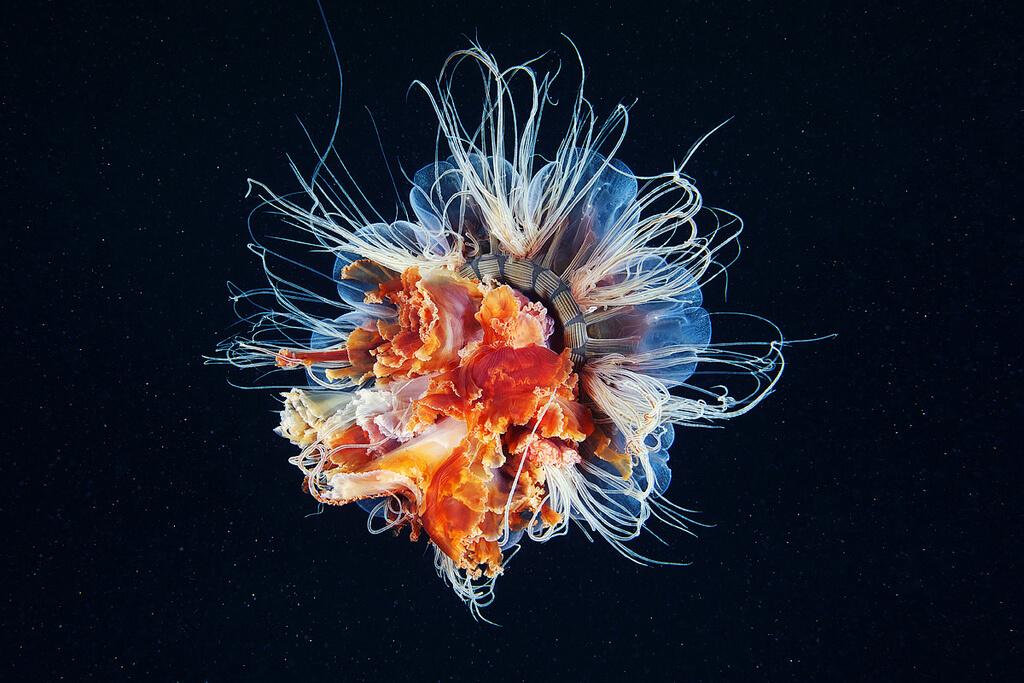 deniz anası fotoğrafları