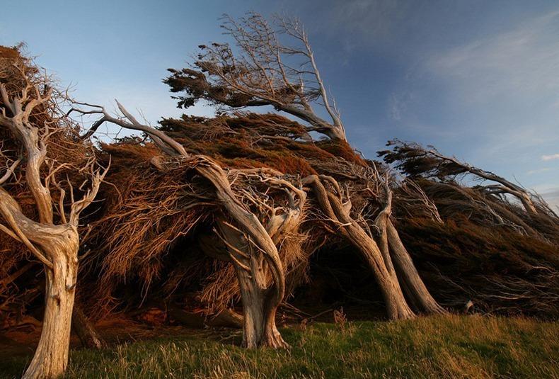 Slope Point, Yeni Zelanda