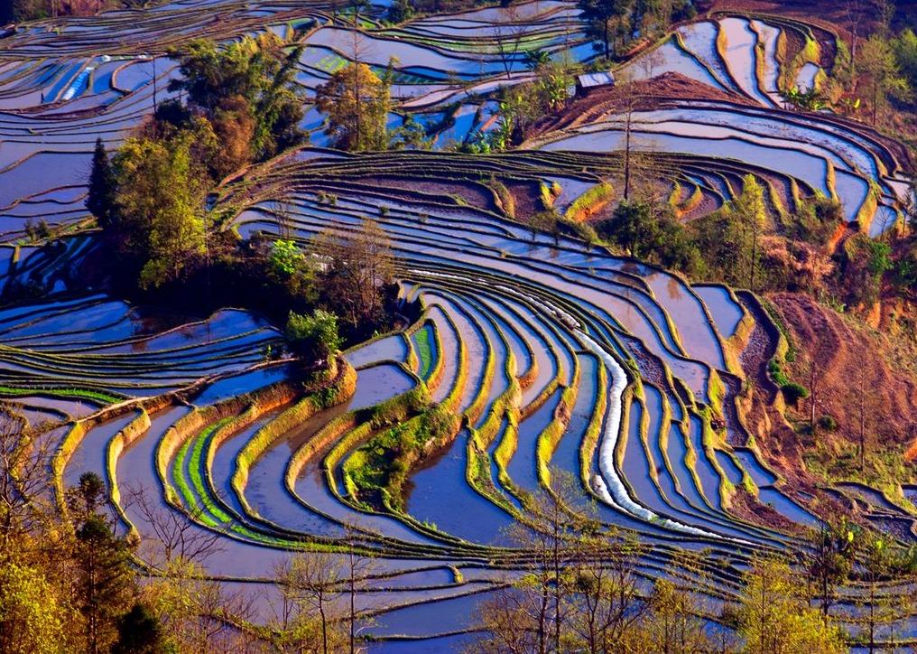 Çeltik tarlaları, Çin