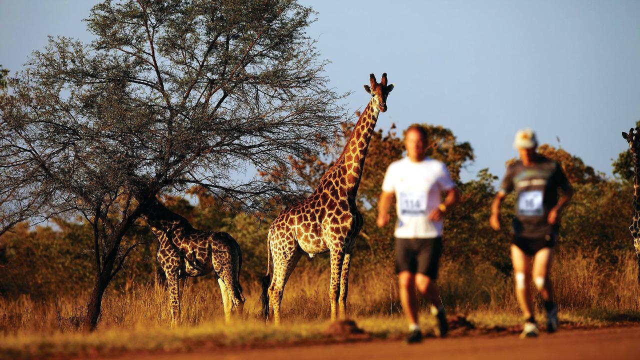 Big Five maratonu