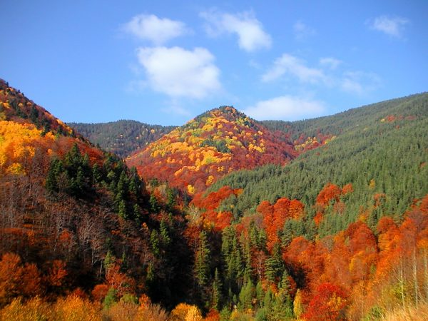 Rodop Dağları, Bulgaristan