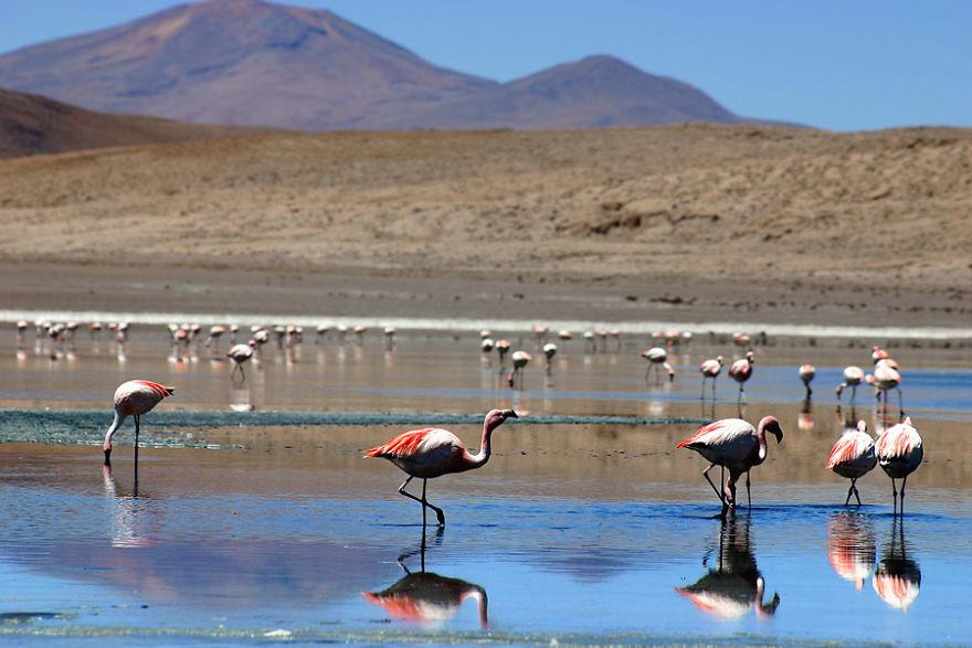 Guney Lipez Bolivya
