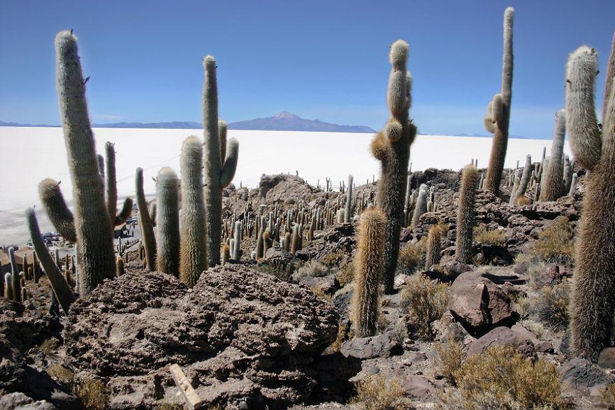 Salar de Uyuni Gölü, Bolivya