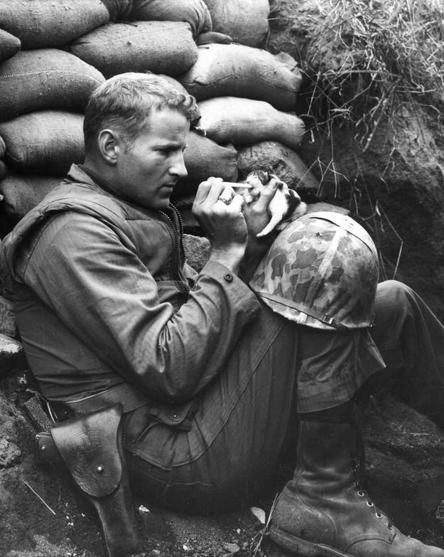 Asker yavru kedi