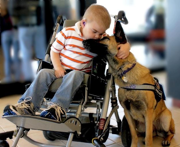 Köpek ve çocuk