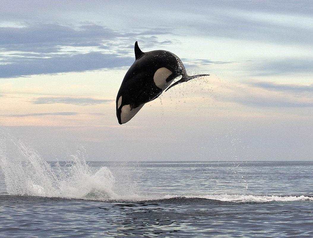 metrelik yat yaninda kucuk kaldi shawn heinrich balina kopekbaligi